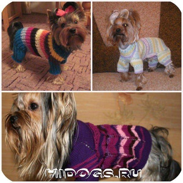 Йорк: одежда для собаки, как сшить самостоятельно, выкройки, как сделать замеры, из чего и как шить.