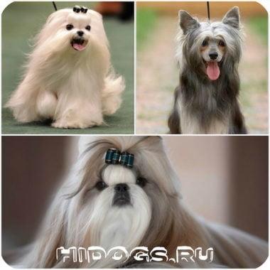 Какое имя выбрать маленькой собаке, варианты кличек для маленьких пород собак.