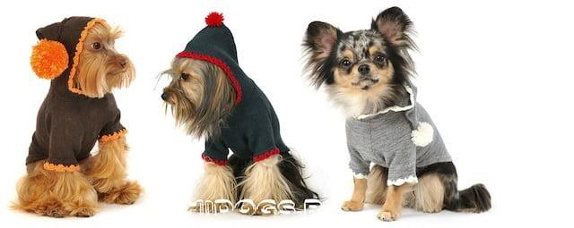 Одежда для маленьких пород собак, как выбрать, сшить самостоятельно, собачья мода.