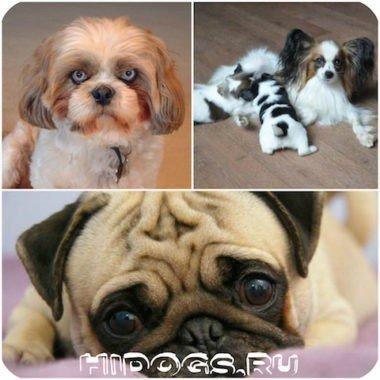 Клички и имена для собак девочек, варианты имен для собак маленьких пород - девочек.