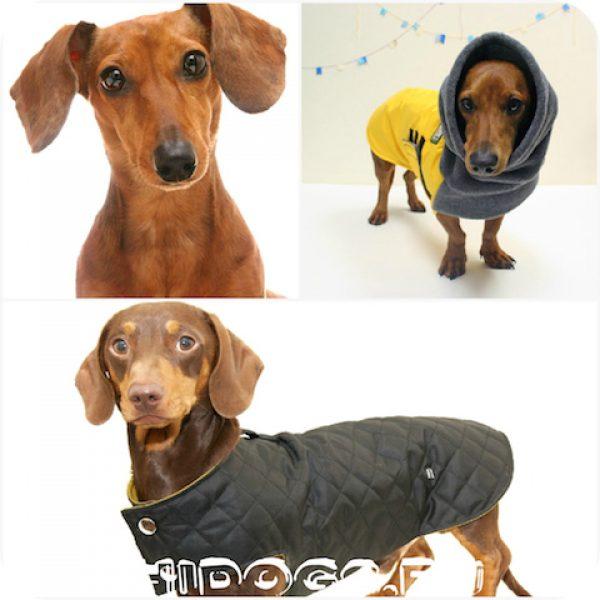 Гардероб таксы, что необходимо иметь из одежды для собаки, коибенезон для собаки, вязанная одежда.
