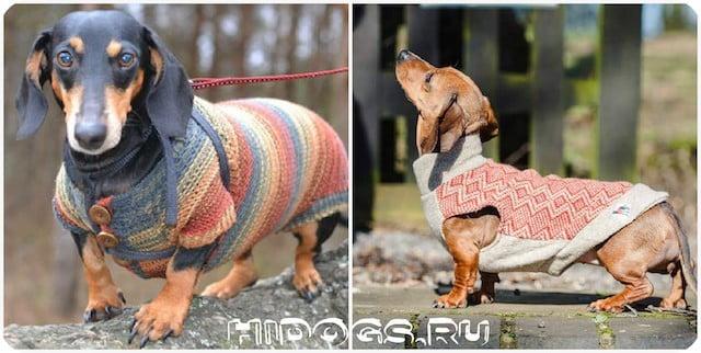 одежда для таксы необходимый гардероб для собаки фото