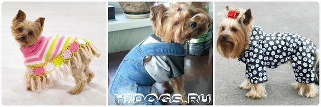 Выкройки одежды для маленьких <i>собак</i> пород собак, какая одежда нужна, как сделать, какую ткань выбрать, как сшить.