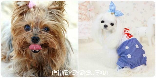 выкройки одежды для собак маленьких пород как сшить одежу фото