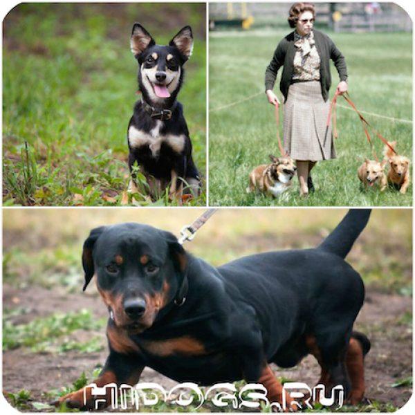 Помесь и метисы собак породы такса, особенности, уход и содержание, внешний вид, проблемы метисов.