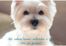 Салоны груминга для собак, особенности гигиенического ухода, услуги в салоне для собак и кошек.