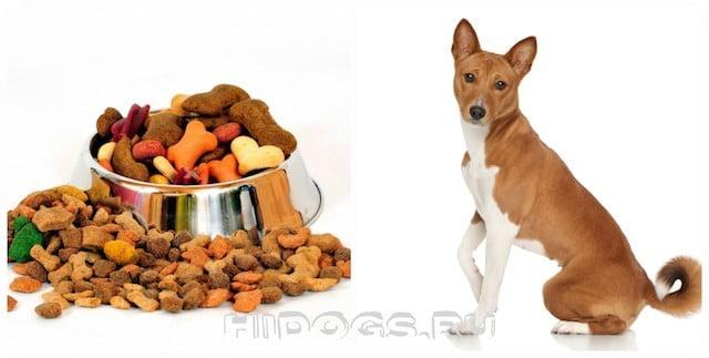 Как правильно кормить собаку, особенности выбора корма для любимца.