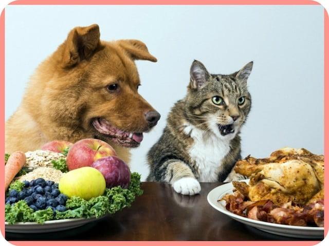 Чем и как кормить собаку, корма Блиц - выбор хозяина.