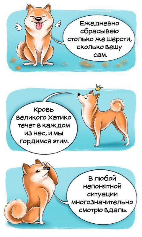 Все о породе собак Сиба (шиба) ину, стандарт, уход и характер, как кормить и воспитывать.