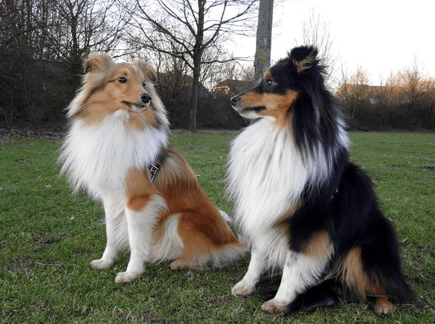 Собаки на прогулке.