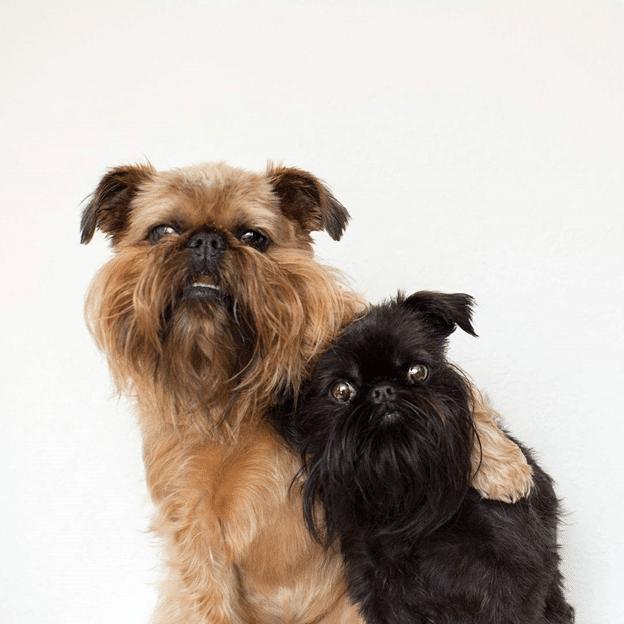 Два милых пёсика.