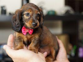 Маленькие собаки: перечень самых популярных пород
