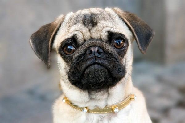 foto 3 03 - Маленькие породы: перечень самых популярных собачек