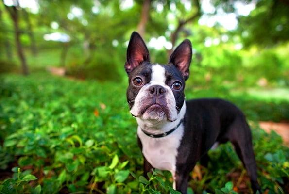 foto 3 04 - Маленькие породы: перечень самых популярных собачек