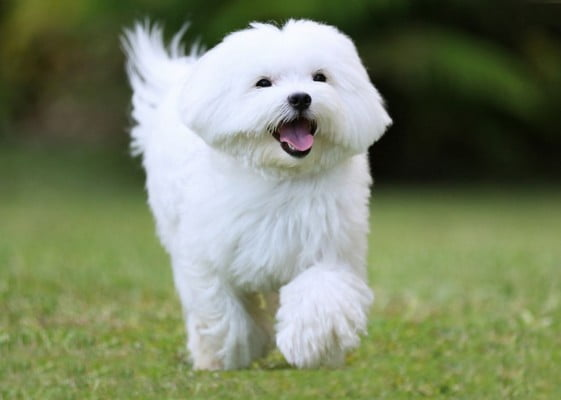 Маленькие породы: перечень самых популярных собачек