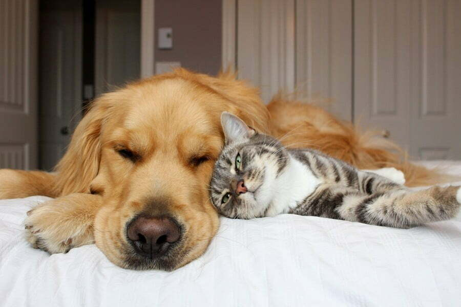 Кошка и собачка спят вместе; 10 пород собак, которые ладят с кошками