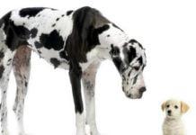 Лучшие большие породы собак
