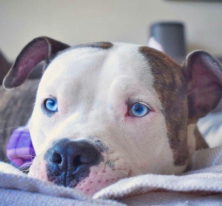 foto 17 11 - Самые милые породы собак