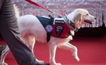 Лучшие породы собак для эмоциональной поддержки
