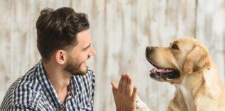 13 пород, из которых получаются отличные собаки-компаньоны