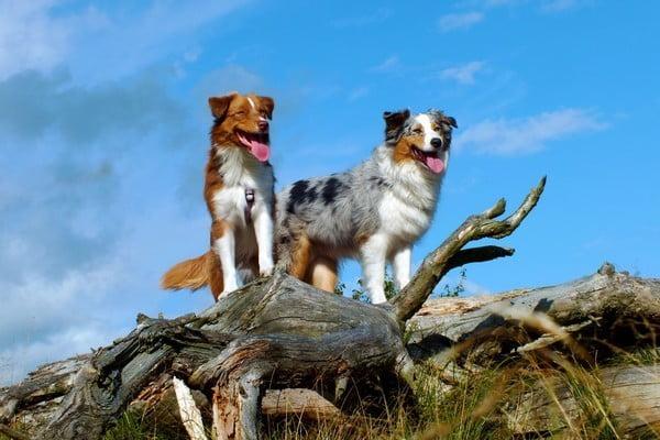 Собаки средних размеров