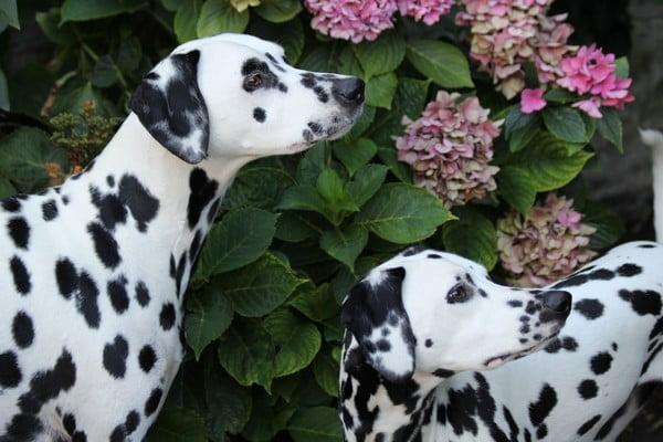 Собаки средних размеров.