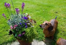 Ядовитые растения для щенков.