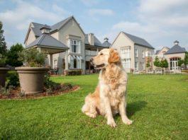 Топ 10 лучших сторожевых собак для охраны и защиты