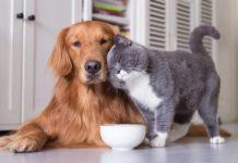 Как представить вашу новую собаку своим кошкам