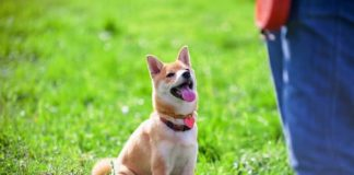 10 забавных и простых трюков, которым можно научить собаку
