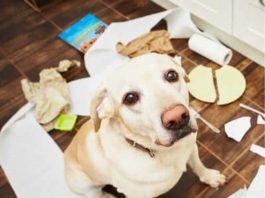10 советов начинающим собаководам
