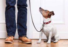 10 основных команд, которые должна знать каждая собака