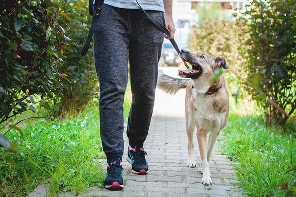 10 основных команд для собак: список и как научить
