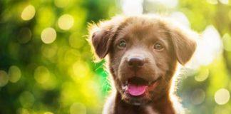 Важные нюансы первого года жизни вашей собаки