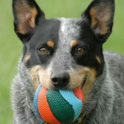 Самые активные породистые собаки для энергичных людей