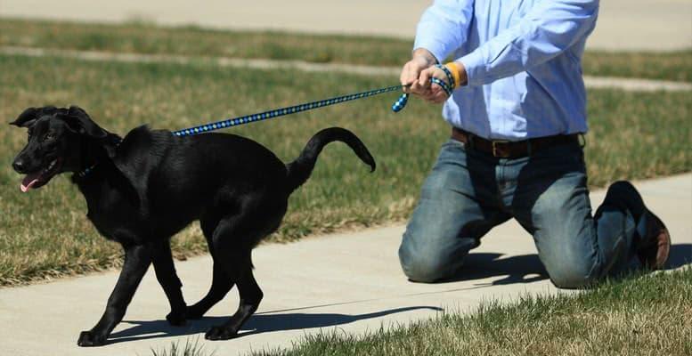 Как выгуливать собаку