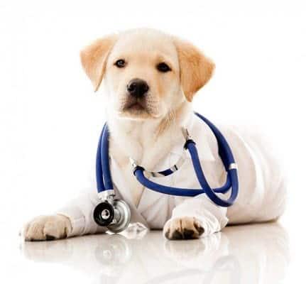 Как подготовиться вашу собаку к ветеринарному осмотру