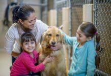 Отпуск по уходу за щенком: в ваш дом приехала новая собака
