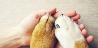 Руководство по приёму собаки из приюта в вашу семью.