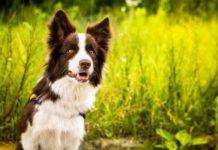 Как правильно выбрать собаку