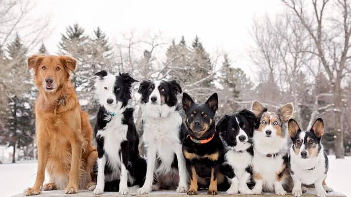 Какую собаку выбрать?