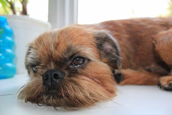 Уставший пёсик