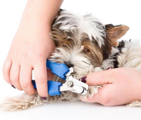 Что делать, если свежеподстриженный коготь вашей собаки начинает кровоточить; как подстричь когти собаке