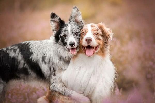 Гериатрические собаки; Возраст собаки по человеческим меркам