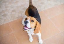 5 веселых игр для собак