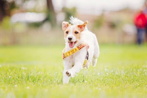 foto 12 06 - 5 веселых игр для собак