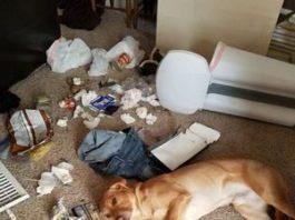 10 распространенных поведенческих проблем у собак