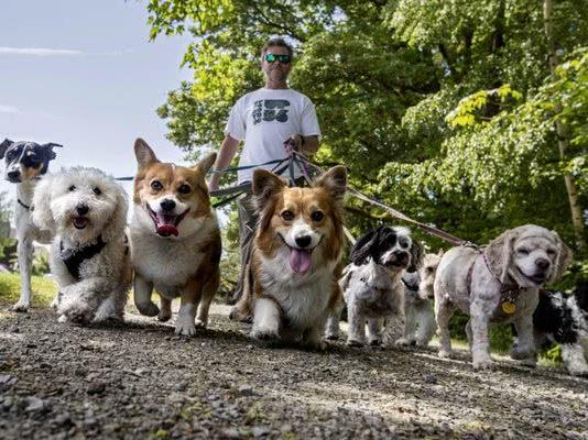 7 породных групп в американском клубе собаководства