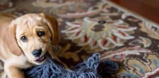 Чего ожидать и как правильно организовать первые 24 часа с новой собакой в доме