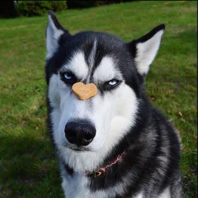 7 пород собак, совсем не подходящих для детей